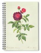 Rosa Gallica Gueriniana Spiral Notebook