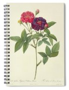 Rosa Gallica Purpurea Velutina Spiral Notebook