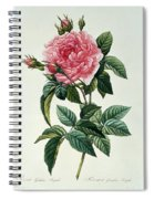 Rosa Gallica Regalis Spiral Notebook