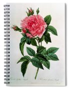 Rosa Gallica Regallis Spiral Notebook