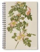 Rosa Hibernica Spiral Notebook