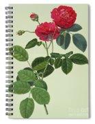 Rosa Holoferica Multiplex Spiral Notebook
