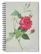 Rosa Indica Cruenta Spiral Notebook