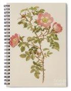 Rosa Involuta Var Wilsoni Spiral Notebook