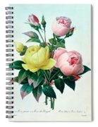 Rosa Lutea And Rosa Indica Spiral Notebook