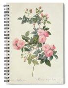 Rosa Multiflora Carnea Spiral Notebook
