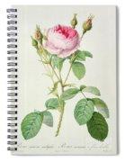 Rosa Muscosa Multiplex Spiral Notebook