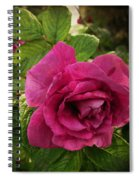 Rosa Rugosa Art Photo Spiral Notebook