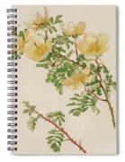 Rosa Spinosissima Var Hispida Spiral Notebook