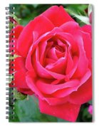 Rose And Buds - Double Knock Out Rose Spiral Notebook