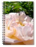 Rose Art Prints Canvas Sunlit Pink Rose Garden Baslee Troutman Spiral Notebook