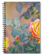 Rose At Sunset Spiral Notebook