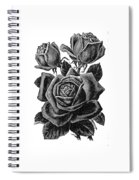 Rose Black Spiral Notebook