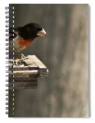 Rose Breasted Grosbeak Feeding Spiral Notebook