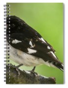 Rose-breasted Grosbeak Male Perched New Jersey  Spiral Notebook