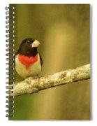 Rose Breasted Grossbeak Eying You Spiral Notebook