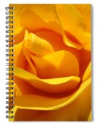 Rose Flower Orange Yellow Roses 1 Golden Sunlit Rose Baslee Troutman Spiral Notebook