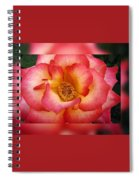 Rose In Reflection Spiral Notebook