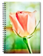 Rose In Window Spiral Notebook