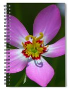 Rose Of Plymouth Spiral Notebook