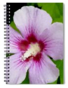Rose Of Sharon Close Up Spiral Notebook