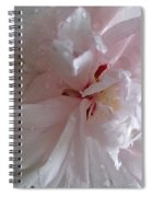 Rose Of Sharon In The Rain Spiral Notebook