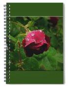 Rose On The Vine Spiral Notebook