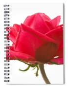 Rose On White Spiral Notebook