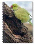 Rose-ringed Parakeet 03 Spiral Notebook