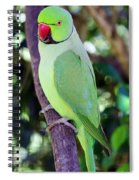 Rose-ringed Parakeet Spiral Notebook