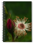 Rose Stages Spiral Notebook