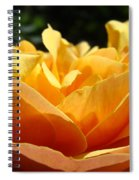 Rose Sunlit Orange Rose Garden 7 Rose Giclee Art Prints Baslee Troutman Spiral Notebook