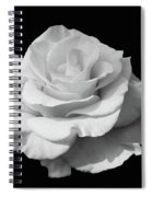 Rose Unfurled In Black And White Spiral Notebook