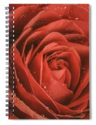 Rose Waiting In The Rain Spiral Notebook