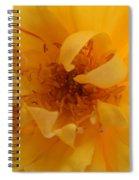 Rose Yellow Spiral Notebook