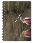 Roseate Spoonbill In Morning Light Spiral Notebook