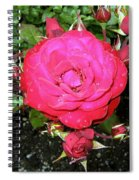 Roses 5 Spiral Notebook