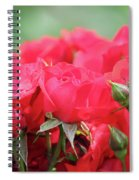 Roses Close Up Nature Spring Scene Spiral Notebook