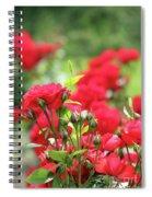 Roses Garden Spring Scene Spiral Notebook