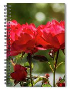 Roses On A Sunny Day Spiral Notebook