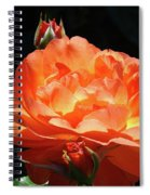 Roses Orange Rose Flowers Rose Garden Art Baslee Troutman Spiral Notebook