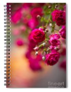 Roses Peace Spiral Notebook