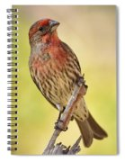 Rosy Finch Macro Spiral Notebook