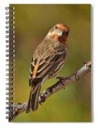 Rosy Finch Posing I Spiral Notebook