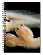 Rosy Ground Frog Tadpoles Spiral Notebook