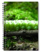 Rosy Maple Moth Caterpillar Spiral Notebook