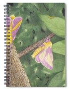 Rosy Maple Moth Gathering Spiral Notebook