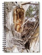 Rough Tree Spiral Notebook