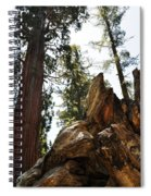 Round Meadow Giant Sequoia Spiral Notebook