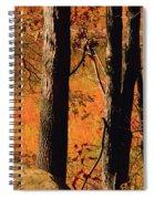 Round Valley State Park 3 Spiral Notebook